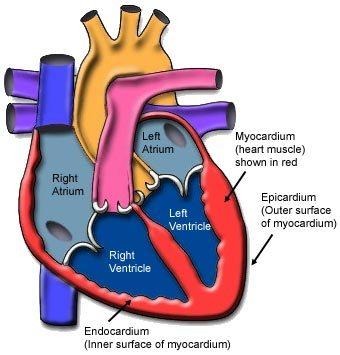 Miokarditis – zapaljenje srčanog mišića