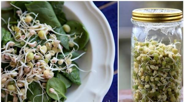 Priprema i upotreba klica od žitarica u ljudskoj ishrani