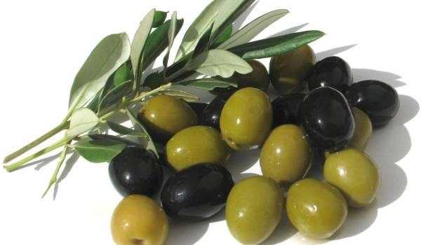 zelene masline u ishrani